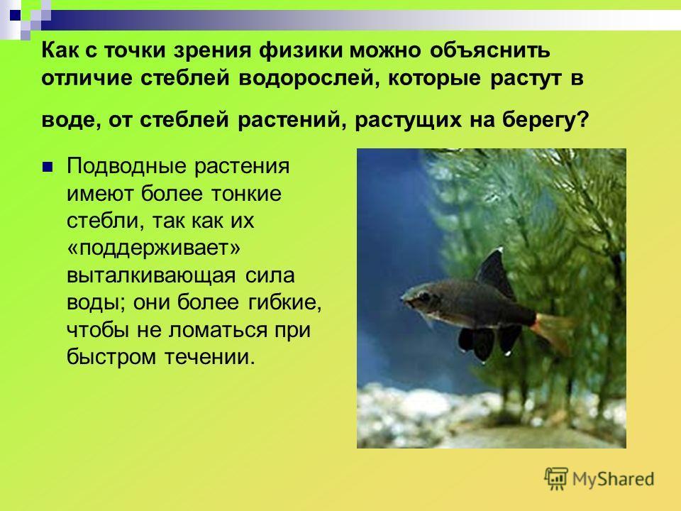 Как с точки зрения физики можно объяснить отличие стеблей водорослей, которые растут в воде, от стеблей растений, растущих на берегу? Подводные растения имеют более тонкие стебли, так как их «поддерживает» выталкивающая сила воды; они более гибкие, ч