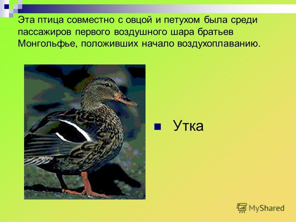 Эта птица совместно с овцой и петухом была среди пассажиров первого воздушного шара братьев Монгольфье, положивших начало воздухоплаванию. Утка