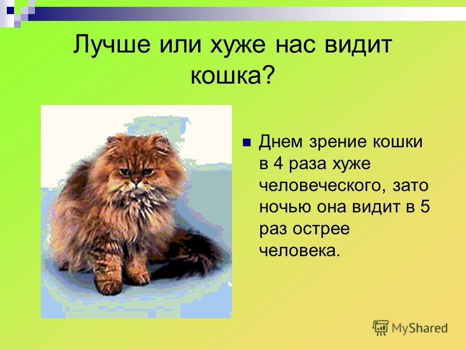 Лучше или хуже нас видит кошка? Днем зрение кошки в 4 раза хуже человеческого, зато ночью она видит в 5 раз острее человека.