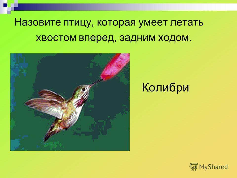 Назовите птицу, которая умеет летать хвостом вперед, задним ходом. Колибри