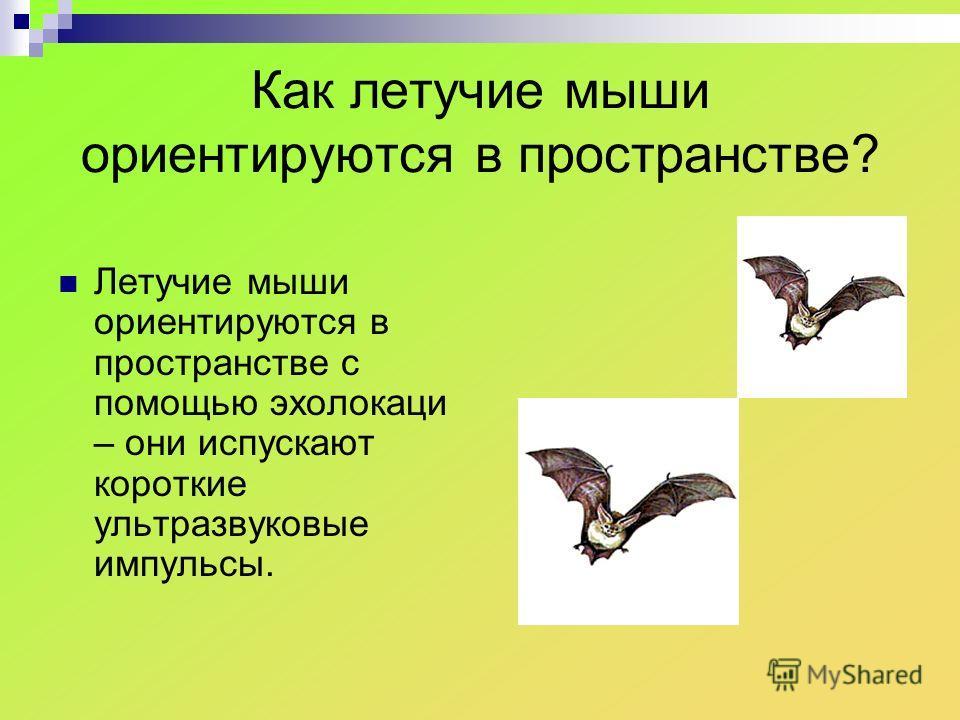 Как летучие мыши ориентируются в пространстве? Летучие мыши ориентируются в пространстве с помощью эхолокаци – они испускают короткие ультразвуковые импульсы.