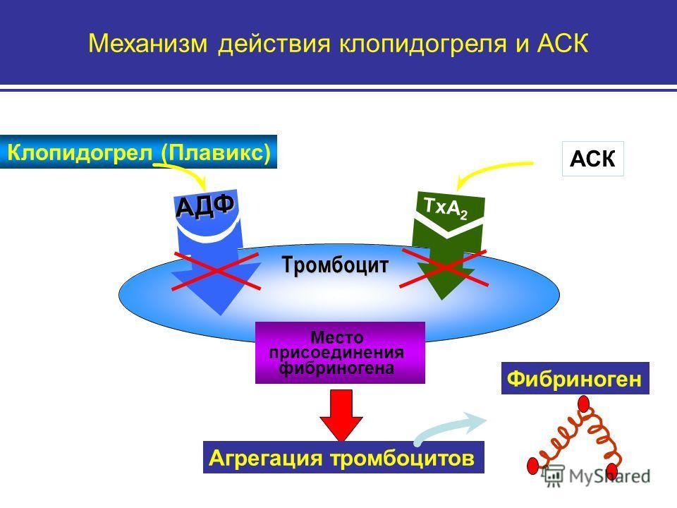 Механизм действия клопидогреля и АСК Агрегация тромбоцитов Фибриноген TxA 2 Место присоединения фибриногена АДФ Тромбоцит Клопидогрел (Плавикс) АСК