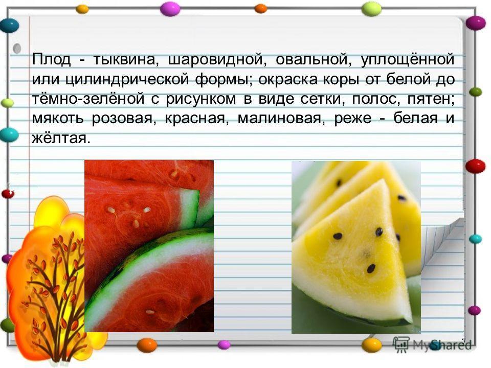 Плод - тыквина, шаровидной, овальной, уплощённой или цилиндрической формы; окраска коры от белой до тёмно-зелёной с рисунком в виде сетки, полос, пятен; мякоть розовая, красная, малиновая, реже - белая и жёлтая. 5