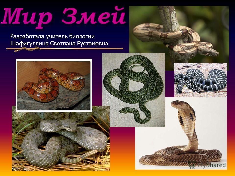 Мир Змей Разработала учитель биологии Шафигуллина Светлана Рустамовна