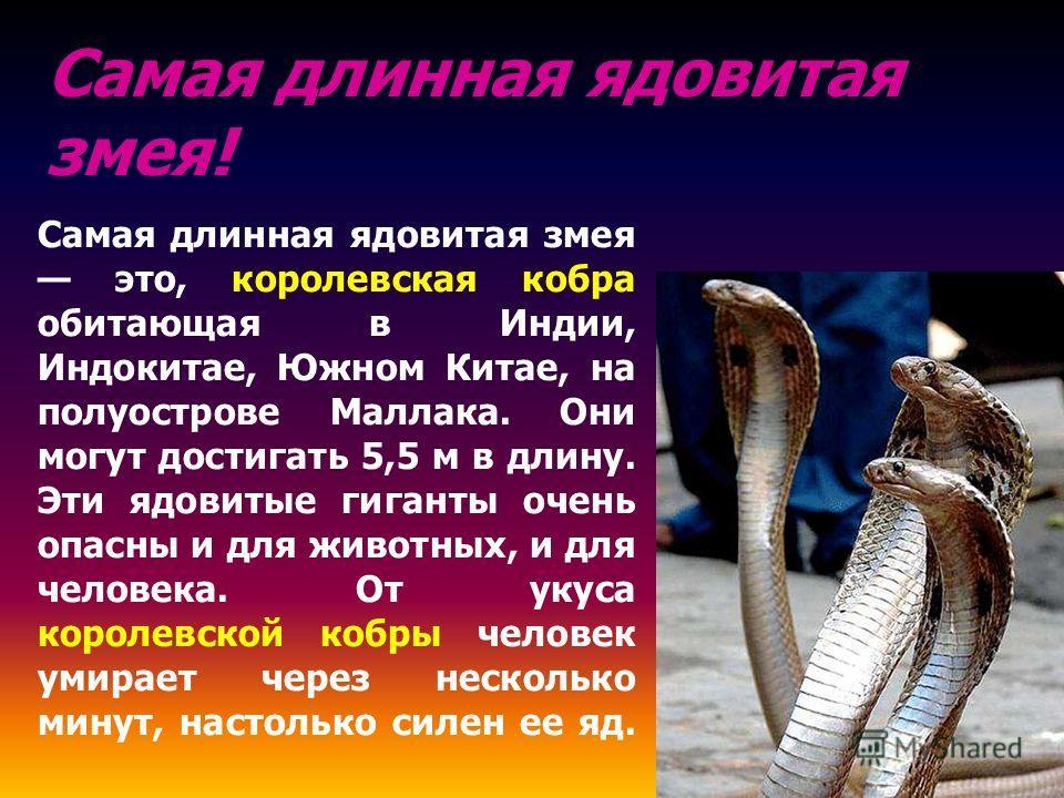 Самая длинная ядовитая змея это, королевская кобра обитающая в Индии, Индокитае, Южном Китае, на полуострове Маллака. Они могут достигать 5,5 м в длину. Эти ядовитые гиганты очень опасны и для животных, и для человека. От укуса королевской кобры чело