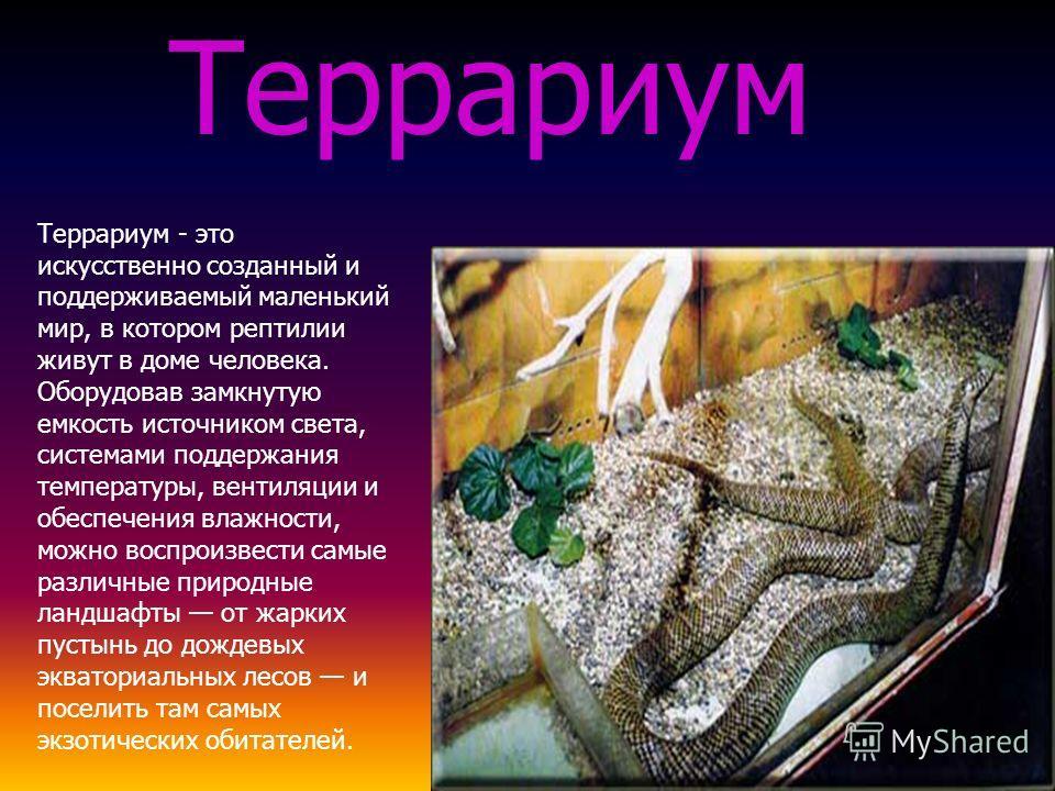 Террариум - это искусственно созданный и поддерживаемый маленький мир, в котором рептилии живут в доме человека. Оборудовав замкнутую емкость источником света, системами поддержания температуры, вентиляции и обеспечения влажности, можно воспроизвести