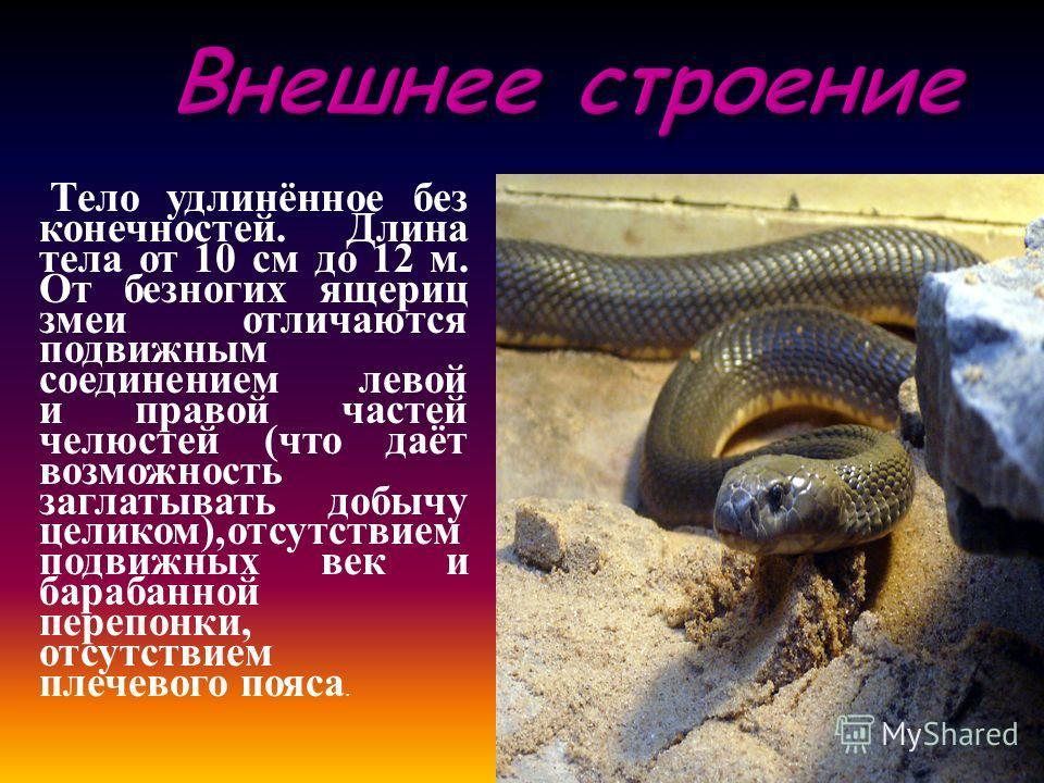 Внешнее строение Тело удлинённое без конечностей. Длина тела от 10 см до 12 м. От безногих ящериц змеи отличаются подвижным соединением левой и правой частей челюстей ( что даёт возможность заглатывать добычу целиком ), отсутствием подвижных век и ба