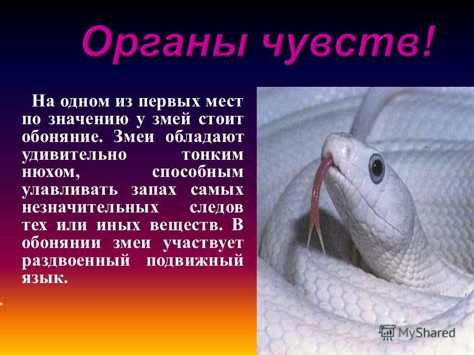 На одном из первых мест по значению у змей стоит обоняние. Змеи обладают удивительно тонким нюхом, способным улавливать запах самых незначительных следов тех или иных веществ. В обонянии змеи участвует раздвоенный подвижный язык..