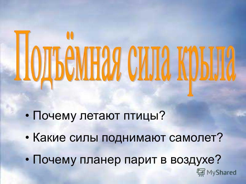 Почему летают птицы? Какие силы поднимают самолет? Почему планер парит в воздухе?