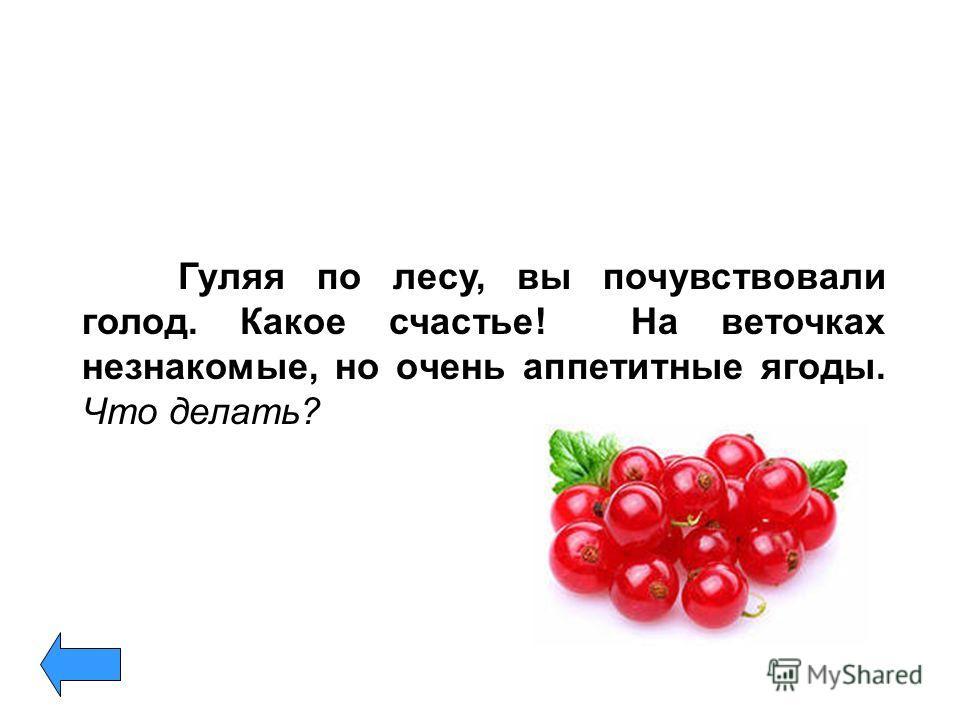 Гуляя по лесу, вы почувствовали голод. Какое счастье! На веточках незнакомые, но очень аппетитные ягоды. Что делать?