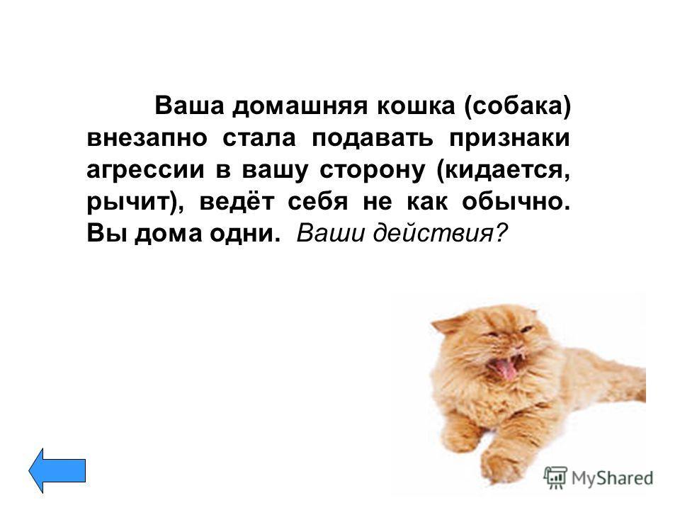 Ваша домашняя кошка (собака) внезапно стала подавать признаки агрессии в вашу сторону (кидается, рычит), ведёт себя не как обычно. Вы дома одни. Ваши действия?