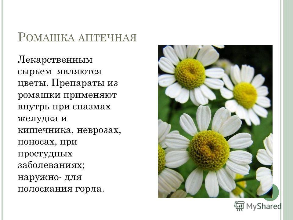 Р ОМАШКА АПТЕЧНАЯ Лекарственным сырьем являются цветы. Препараты из ромашки применяют внутрь при спазмах желудка и кишечника, неврозах, поносах, при простудных заболеваниях; наружно- для полоскания горла.