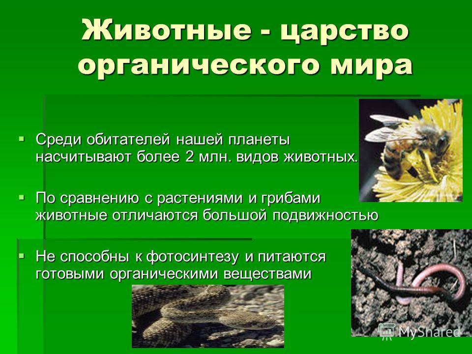 Животные - царство органического мира Среди обитателей нашей планеты насчитывают более 2 млн. видов животных. Среди обитателей нашей планеты насчитывают более 2 млн. видов животных. По сравнению с растениями и грибами животные отличаются большой подв