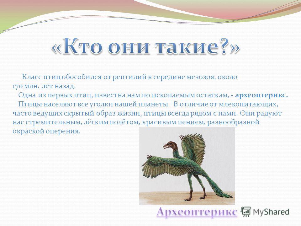 Класс птиц обособился от рептилий в середине мезозоя, около 170 млн. лет назад. Одна из первых птиц, известна нам по ископаемым остаткам, - археоптерикс. Птицы населяют все уголки нашей планеты. В отличие от млекопитающих, часто ведущих скрытый образ