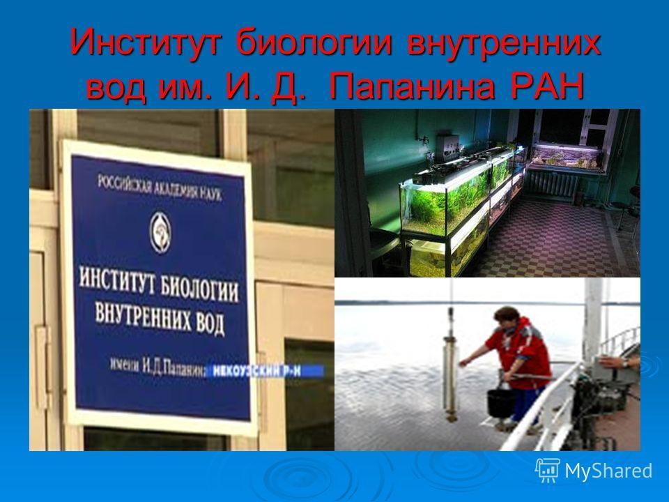 Институт биологии внутренних вод им. И. Д. Папанина РАН