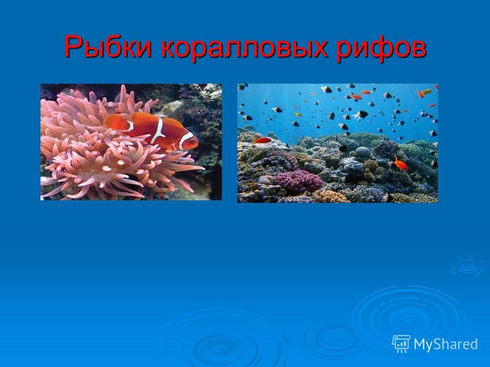 Рыбки коралловых рифов