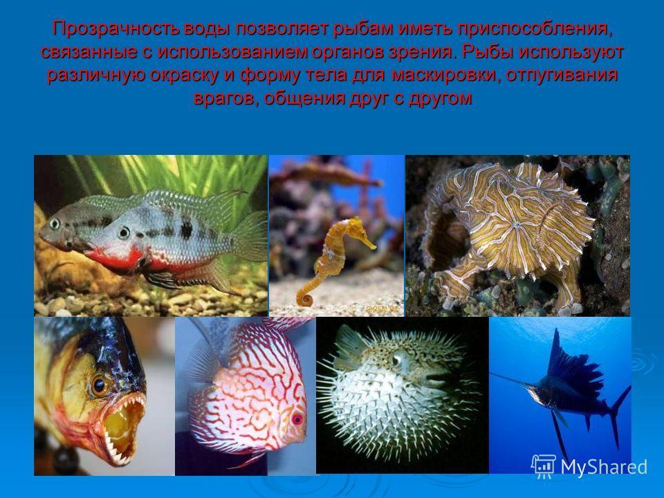 Прозрачность воды позволяет рыбам иметь приспособления, связанные с использованием органов зрения. Рыбы используют различную окраску и форму тела для маскировки, отпугивания врагов, общения друг с другом