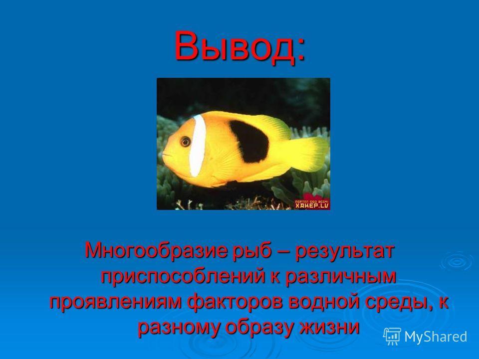 Вывод: Многообразие рыб – результат приспособлений к различным проявлениям факторов водной среды, к разному образу жизни