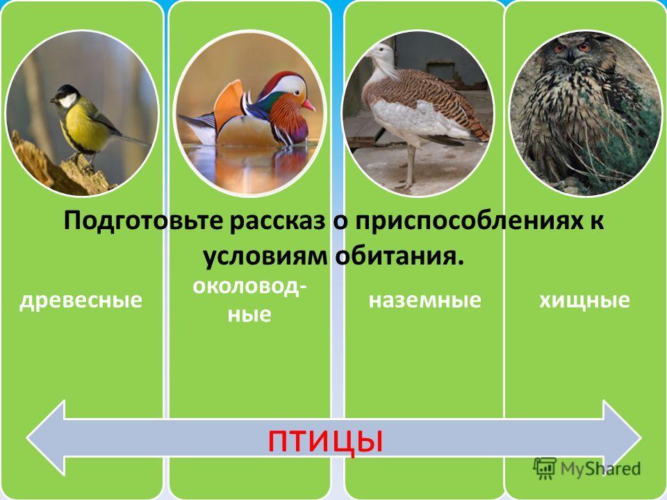 древесные околовод- ные наземныехищные птицы Подготовьте рассказ о приспособлениях к условиям обитания.
