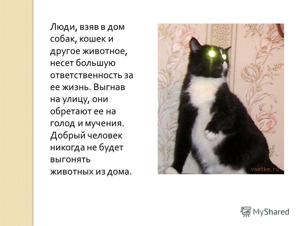 Что за животное 1