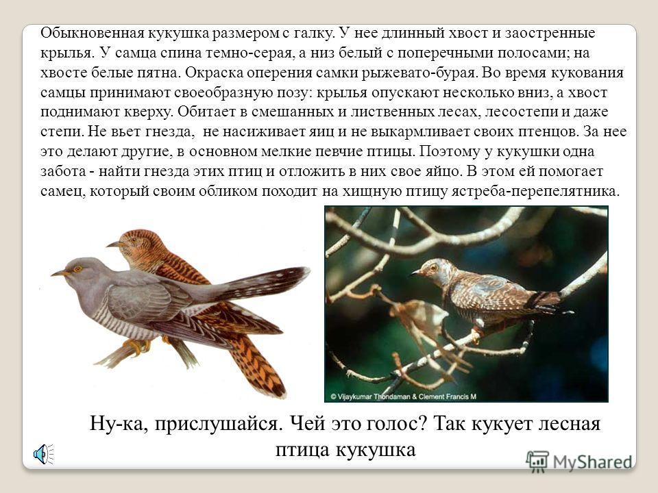 Давай прогуляемся с тобой в лес. Узнаем, какие птицы и животные здесь живут и послушаем их голоса.