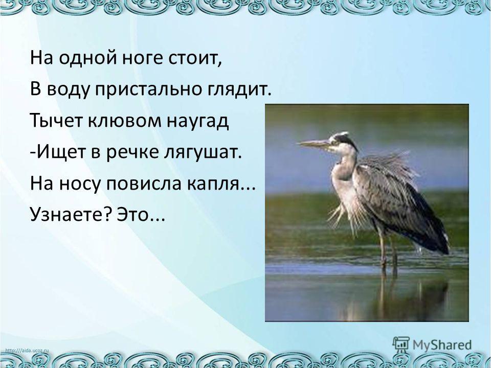 На одной ноге стоит, В воду пристально глядит. Тычет клювом наугад -Ищет в речке лягушат. На носу повисла капля... Узнаете? Это...