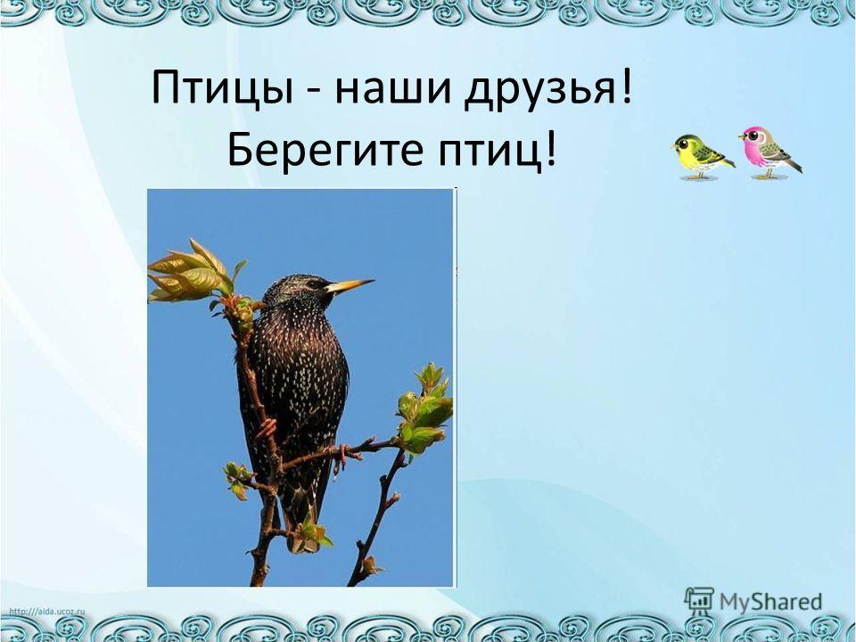 Птицы - наши друзья! Берегите птиц!
