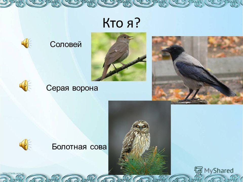 Кто я? Соловей Серая ворона Болотная сова