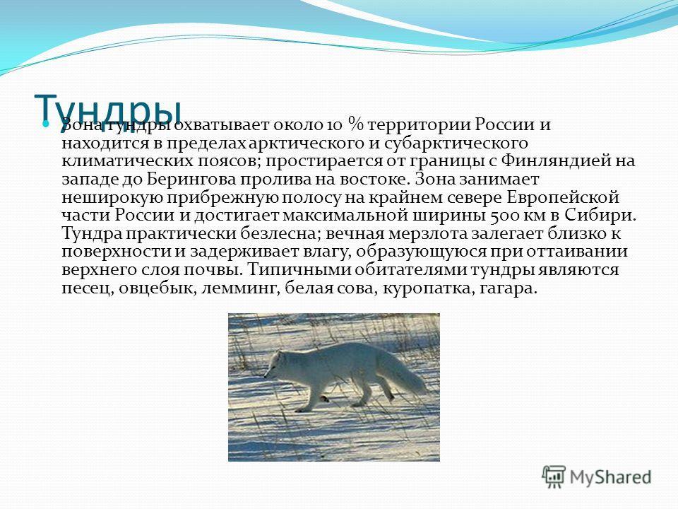 Тундры Зона тундры охватывает около 10 % территории России и находится в пределах арктического и субарктического климатических поясов; простирается от границы с Финляндией на западе до Берингова пролива на востоке. Зона занимает неширокую прибрежную