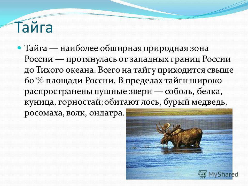 Тайга Тайга наиболее обширная природная зона России протянулась от западных границ России до Тихого океана. Всего на тайгу приходится свыше 60 % площади России. В пределах тайги широко распространены пушные звери соболь, белка, куница, горностай; оби