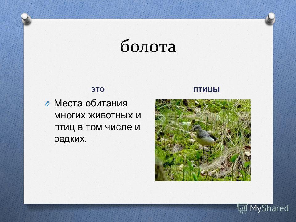 болота это птицы O Места обитания многих животных и птиц в том числе и редких.