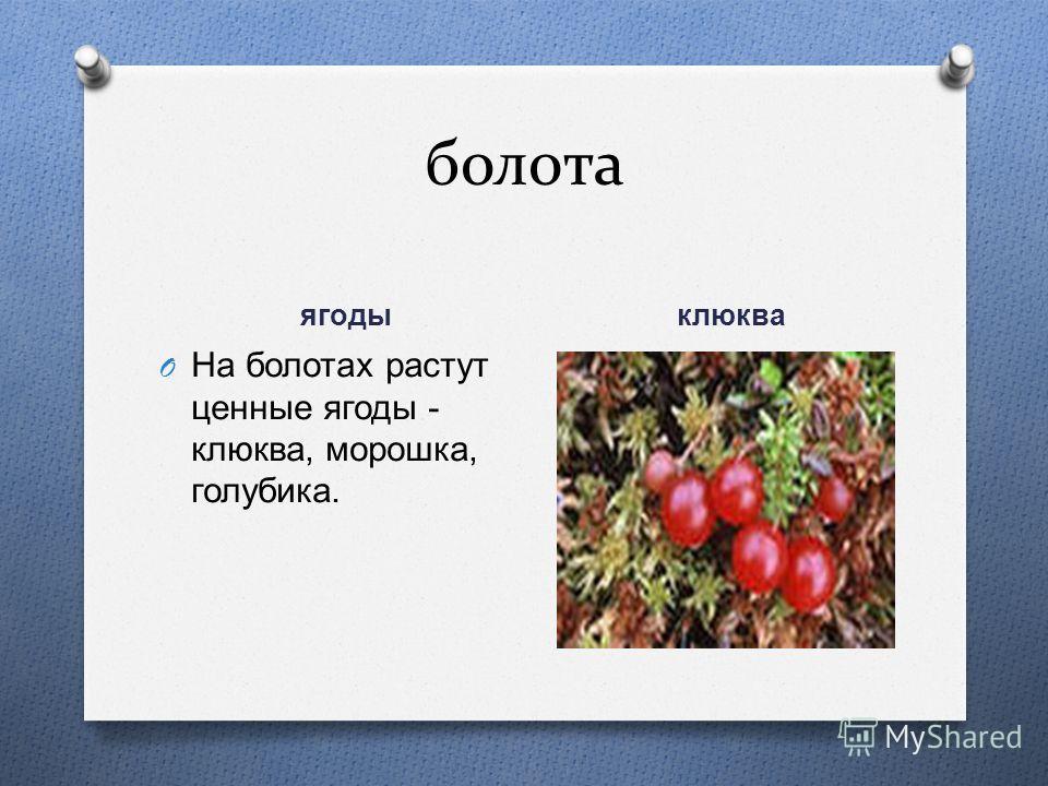 болота ягоды клюква O На болотах растут ценные ягоды - клюква, морошка, голубика.