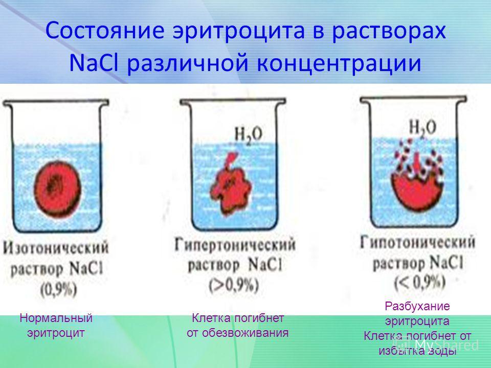 Состояние эритроцита в растворах NaCl различной концентрации Нормальный эритроцит Клетка погибнет от обезвоживания Разбухание эритроцита Клетка погибнет от избытка воды