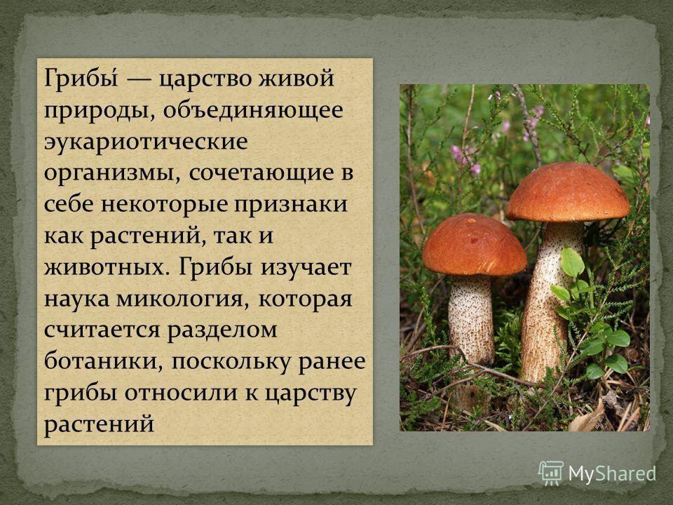 Грибы́ царство живой природы, объединяющее эукариотические организмы, сочетающие в себе некоторые признаки как растений, так и животных. Грибы изучает наука микология, которая считается разделом ботаники, поскольку ранее грибы относили к царству раст