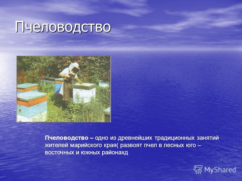 Пчеловодство Пчеловодство – одно из древнейших традиционных занятий жителей марийского края( развоят пчел в лесных юго – восточных и южных районахд
