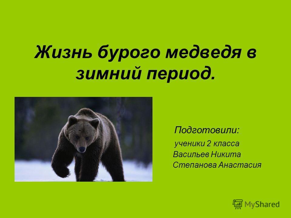 Жизнь бурого медведя в зимний период. Подготовили: ученики 2 класса Васильев Никита Степанова Анастасия