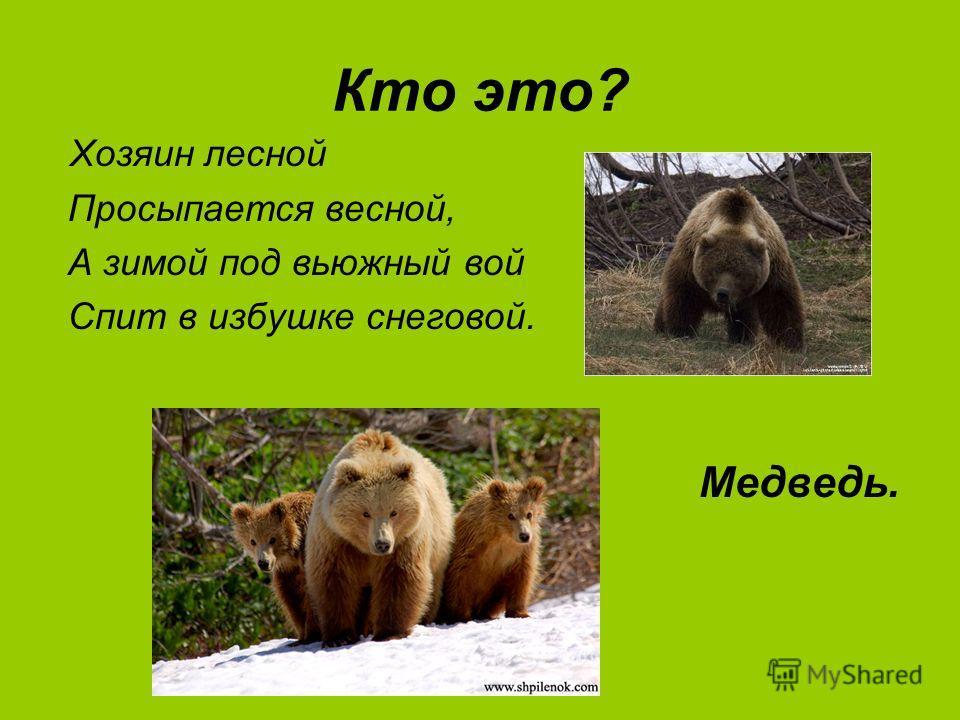 Кто это? Хозяин лесной Просыпается весной, А зимой под вьюжный вой Спит в избушке снеговой. Медведь.