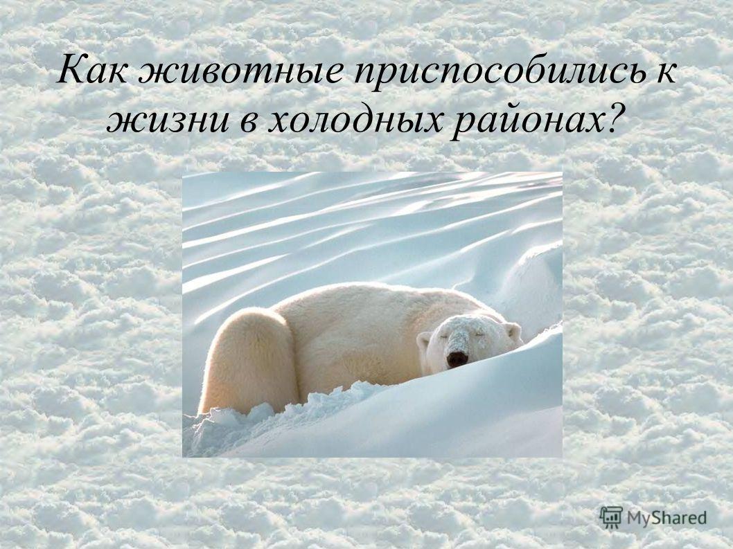 Как животные приспособились к жизни в холодных районах?
