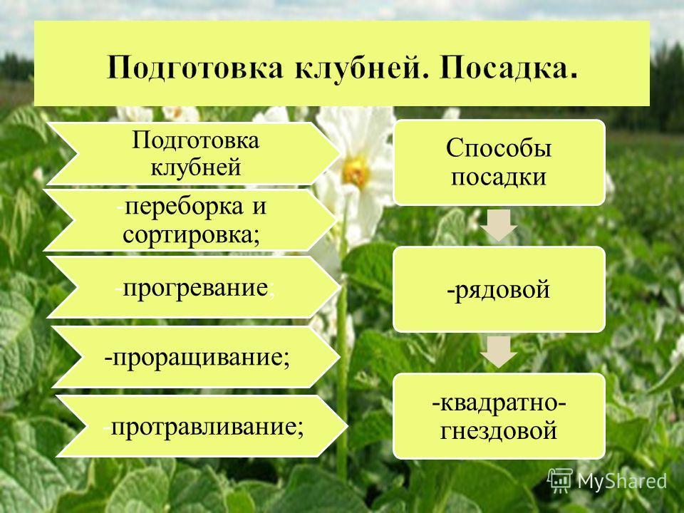 Подготовка клубней -переборка и сортировка; -прогревание; -проращивание; -протравливание; Способы посадки -рядовой -квадратно- гнездовой