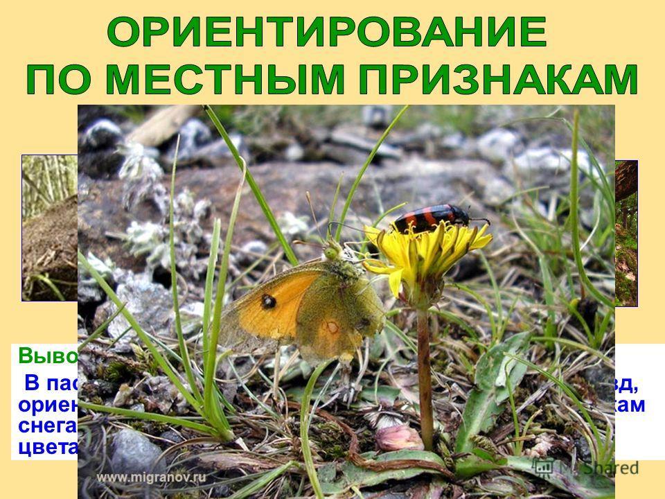 Вывод: В пасмурную погоду, когда не видно Солнца или звёзд, ориентироваться можно по траве, проталинам, остаткам снега, коре и веткам деревьев, мхам и лишайникам, цветам, муравейникам, бабочкам.