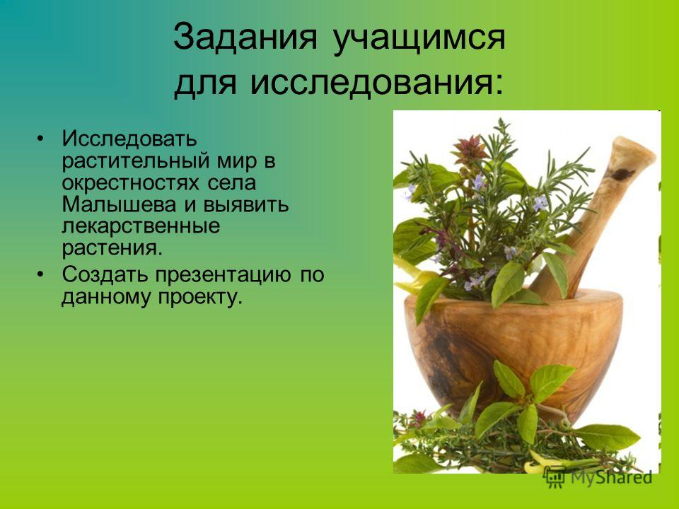 Задания учащимся для исследования: Исследовать растительный мир в окрестностях села Малышева и выявить лекарственные растения. Создать презентацию по данному проекту.
