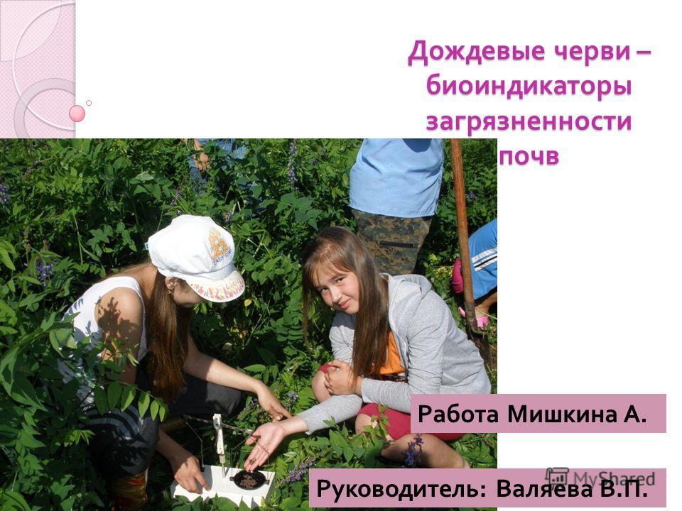 Дождевые черви – биоиндикаторы загрязненности почв Работа Мишкина А. Руководитель : Валяева В. П.