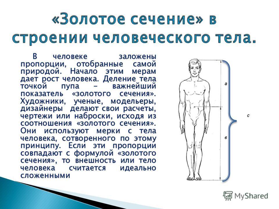 В человеке заложены пропорции, отобранные самой природой. Начало этим мерам дает рост человека. Деление тела точкой пупа - важнейший показатель «золотого сечения». Художники, ученые, модельеры, дизайнеры делают свои расчеты, чертежи или наброски, исх