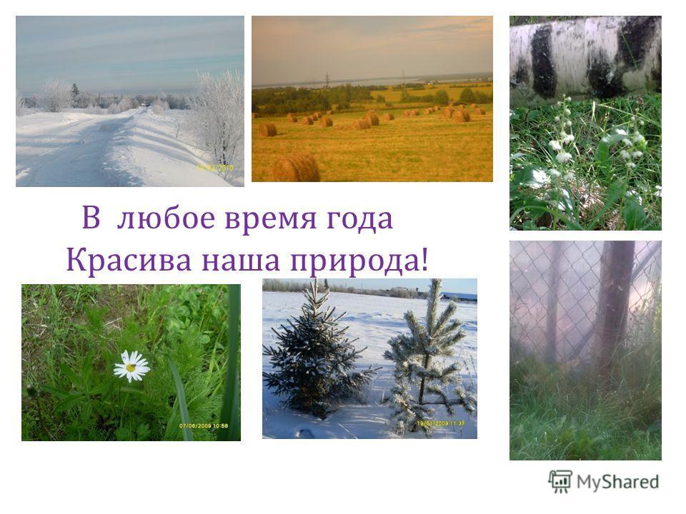 Здесь воздух чистый и прозрачный, Здесь гомон птиц разнообразный. А на лугу «ковёр» цветной Лес вырос пышною стеной.