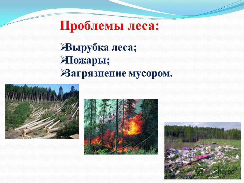 Проблемы леса: Вырубка леса; Пожары; Загрязнение мусором.
