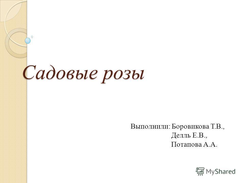 Садовые розы Выполнили: Боровикова Т.В., Делль Е.В., Потапова А.А.