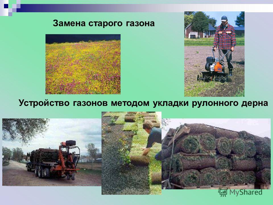 Замена старого газона Устройство газонов методом укладки рулонного дерна