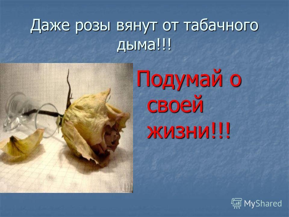 Даже розы вянут от табачного дыма!!! Подумай о своей жизни!!!