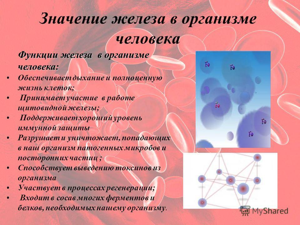 Значение железа в организме человека Функции железа в организме человека: Обеспечивает дыхание и полноценную жизнь клеток; Принимает участие в работе щитовидной железы; Поддерживает хороший уровень иммунной защиты Разрушает и уничтожает, попадающих в
