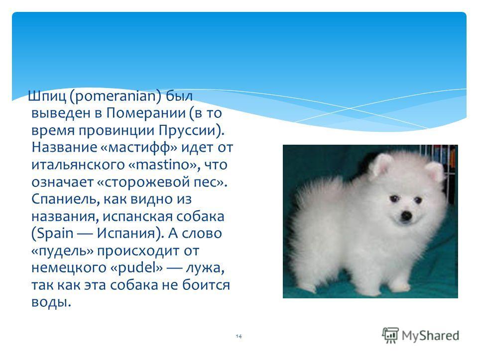 14 Шпиц (pomeranian) был выведен в Померании (в то время провинции Пруссии). Название «мастифф» идет от итальянского «mastino», что означает «сторожевой пес». Спаниель, как видно из названия, испанская собака (Spain Испания). А слово «пудель» происхо